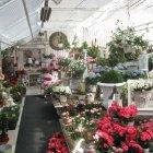 В любой сезон в местных цветочных магазинах глаза разбегаются